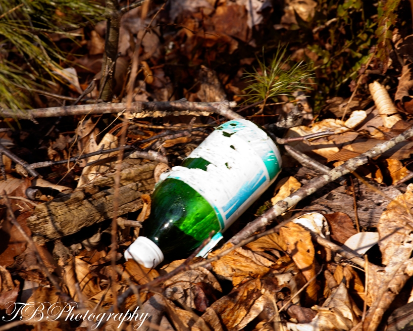 trash on the forest floor